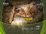"""水下谜团·丛林""""不速客"""" 00:24:17"""