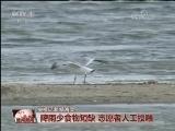 [视频]探秘全球最主要遗鸥繁殖地
