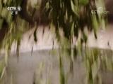 《汉中栈道》 第五集 00:24:03