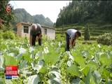 [贵州新闻联播]开阳:3000名党员干部进农家 助农惠民谋发展