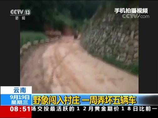 [朝闻天下]云南 野象闯入村庄 一周弄坏五辆车