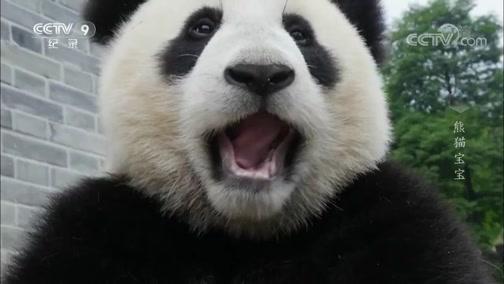 熊猫宝宝 00:49:46
