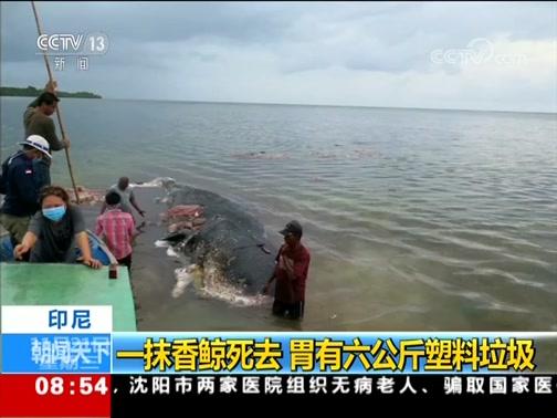 [朝闻天下]印尼 一抹香鲸死去 胃有六公斤塑料垃圾