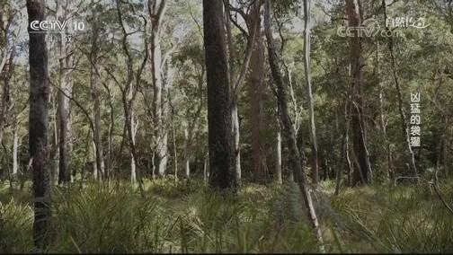[自然传奇]什么样的怪兽 竟能把澳洲生猛动物们吓一跳