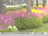 午间新闻广场 2018.12.12 - 厦门电视台 00:20:01