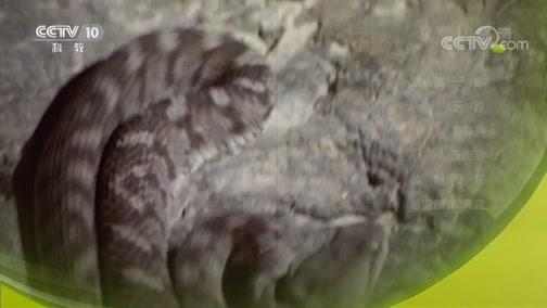 《自然传奇》 20190210 十大毒蛇4
