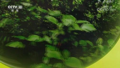 《自然传奇》 20190212 蛇之奇观