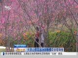 午间新闻广场 2019.02.24 - 厦门电视台 00:20:56