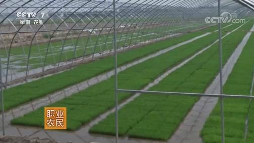 《农广天地》 20190227 机插水稻再生栽培技术