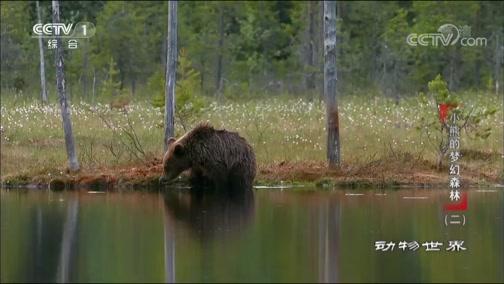 《动物世界》 20190314 小熊的梦幻森林(二)