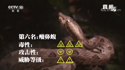 《真相》 20190325 十大致命毒蛇(上)