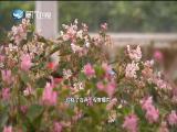 新闻斗阵讲 2019.04.08 - 厦门卫视 00:24:28