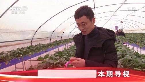 [科技苑]椰壳上种出红草莓 20190411