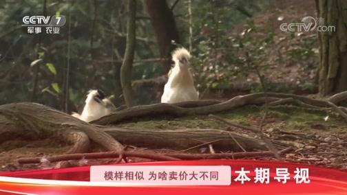 """《科技苑》 20190425 住别墅 打""""擂台"""" 林下跑乌鸡"""