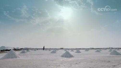 《你所不知道的那些盐》第8集 采盐吧!爸爸