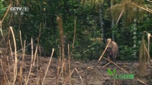 [人与自然]许多大象误入圈套 被绳子紧绑住肢体