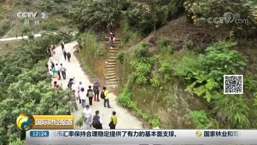 [国际财经报道]安徽歙县:果园搭台引客来 枇杷减产不减收