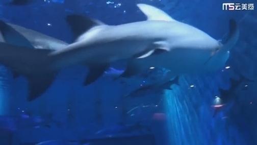 【看见闽西南】漫步鲨鱼王国  感受浪漫海洋 00:00:10