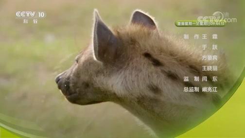 《自然传奇》 20190622 鬣狗守则