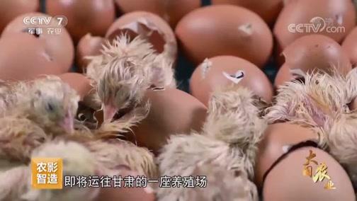 《大国农业》 第二集 餐桌四季
