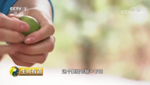 《生财有道》 20190711 夏日经济系列 云南元江:芒果飘香财富来