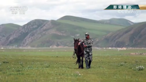 《军旅人生》 20190726 尼都塔生:草原上的骏马