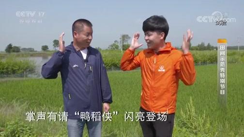 """《田间示范秀》 20190818 """"鸭稻侠""""闯江湖"""