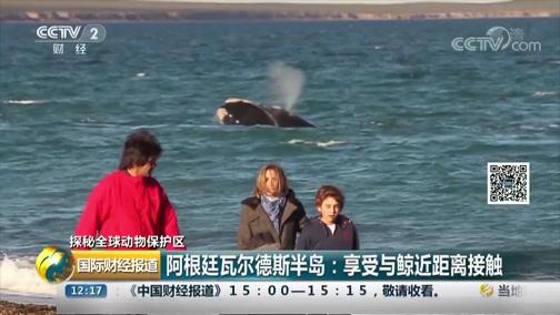 [国际财经报道]探秘全球动物保护区 阿根廷瓦尔德斯半岛:享受与鲸近距离接触