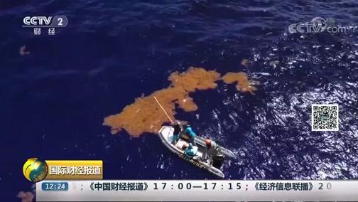 [国际财经报道]马尾藻海:塑料垃圾威胁海龟等生物生存