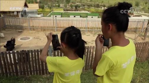 《芝麻开门》 20190824 挑战大现场 南阳农耕文化(下)