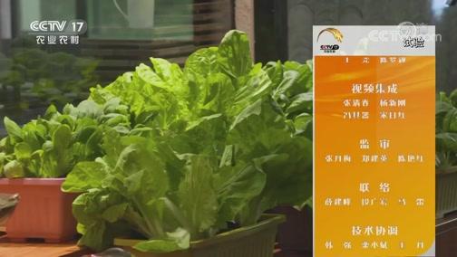 《田间示范秀》 20190910 种在盆里的蔬菜