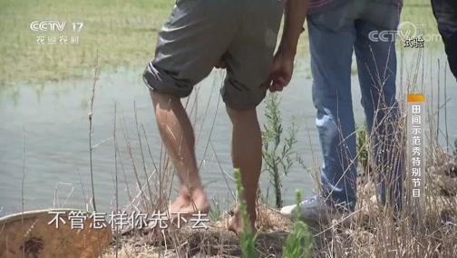 《田间示范秀》 20190912 水稻田里帮手多