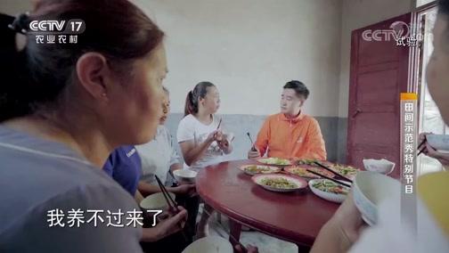 """《田间示范秀》 20190918 把蚕宝宝送进""""托儿所"""""""