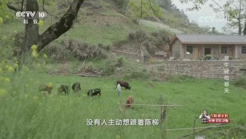 《讲述》 20190921 系列节目《我奋斗·我幸福》 放牛娃的春天