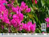 特区新闻广场 2019.09.21 - 厦门电视台 00:22:30