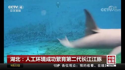 [中国新闻]湖北:人工环境成功繁育第二代长江江豚