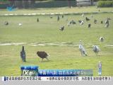 特区新闻广场 2019.10.08 - 厦门电视台 00:22:39