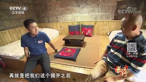[远方的家]长江行(46)长江岸边的绿色卫士:中山杉