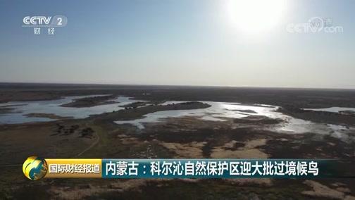 [国际财经报道]内蒙古:科尔沁自然保护区迎大批过境候鸟