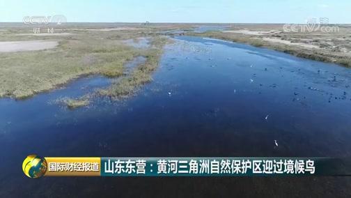 [国际财经报道]山东东营:黄河三角洲天然保护区迎过境候鸟