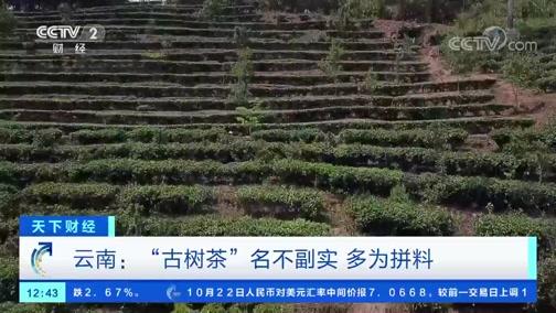 """[天下财经]云南:""""古树茶""""名不副实 多为拼料"""