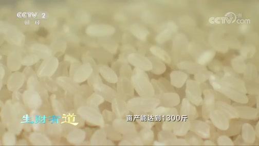 [生财有道]好稻好米 一碗米汤检验大米好坏