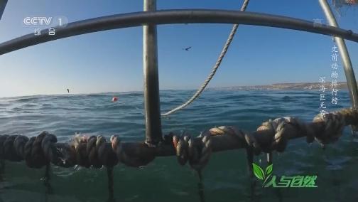 [人与自然]潜入深海!近距离接触大白鲨 看完一身冷汗