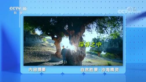 《地理·中国》 20200110 自然胜景·沙海精灵
