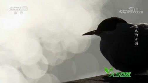 《人与自然》 20200128 海鸟的家园