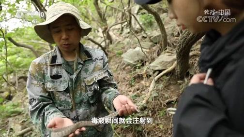 《地理·中国》 20200209 探秘自然保护区·岛链奇观