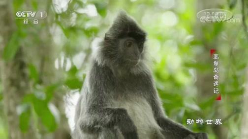 《动物世界》 20200210 翡翠岛奇遇记