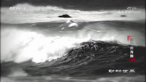 《动物世界》 20200224 温情的海獭