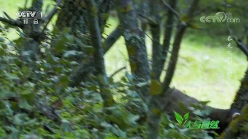 《人与自然》 20200225 春光映照下的森林