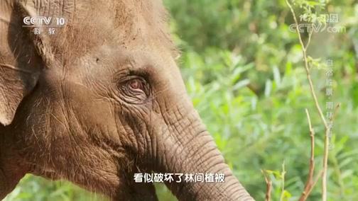 《地理·中国》 20200324 自然胜景·雨林探秘 2